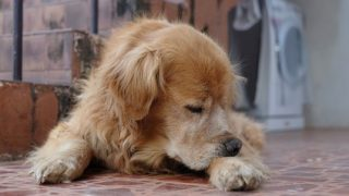 7 Signs Your Dog Has Allergies Making Him Miserable
