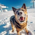 How To Protect Dog Paws In Winter For Soft Healthy Feet
