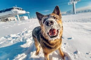 how to protect dog paws in winter