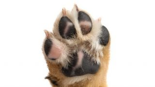 Dog Foot Problems You Need To Take Care Of Now