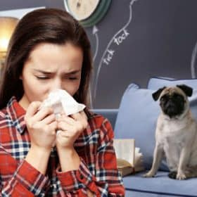Allergy To Dogs Does Not Mean You can't Have a Dog