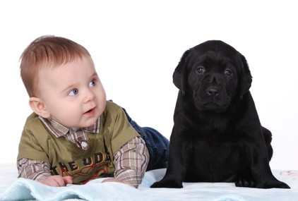 Choosing The Best Dogs For Children