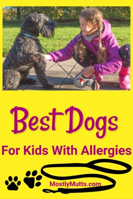 best hypoallergenic dog for kids
