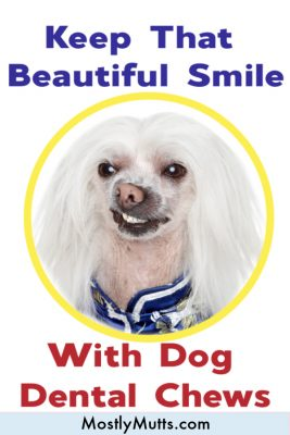dental chews for your dog