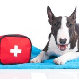 First Aid Kit For Dogs-Be Prepared For Any Emergency
