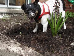 Clean Up Dog Poop In The Yard To Enjoy Your Outdoors