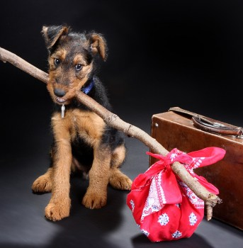 travel-with-your-dog