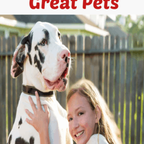 Extra Large Dog Breeds; The Gentle Giants Of The Dog World