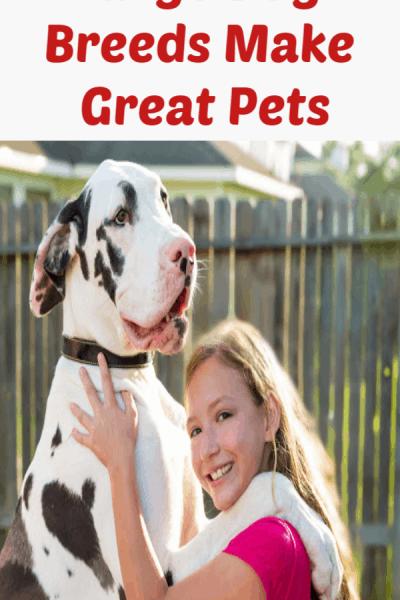 extra large dog breeds