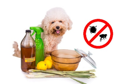 natural ways to get rid of fleas