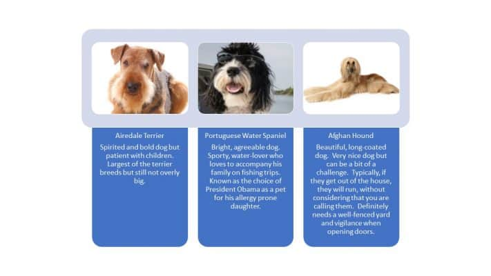 large hypoallergenic dog breeds