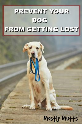 prevent dog from getting lost