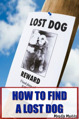 find your lost dog