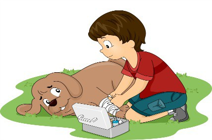 make your own dog first aid kit