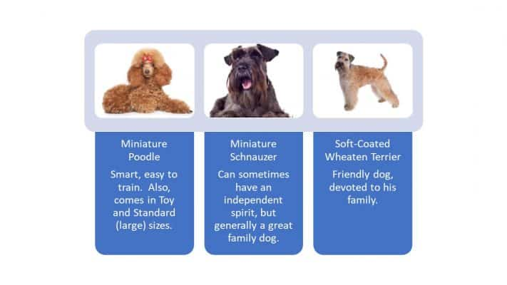 medium hypoallergenic dog breeds