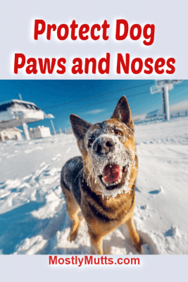 protect dog paws and nose