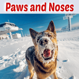 Keep Your Dog Safe From Dangers Hidden And In Plain View