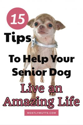 senior dog health