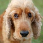 Dog Separation Anxiety (aka, I REALLY MISS YOU!)