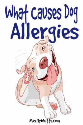 causes of dog allergies