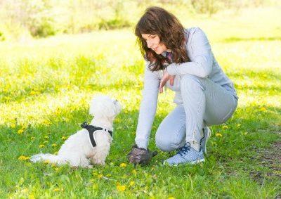 Clean Up Dog Poop In The Yard